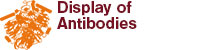 Display of Antibodies