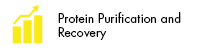 Protein Purification and Recovery