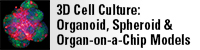 3D Cell Culture: Organoid, Spheroid, and Organ-on-a-Chip Models
