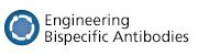 Engineering Bispecific Antibodies